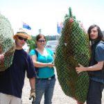 real Christmas trees wrapped near Frankston