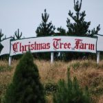 Christmas Tree Farm Moorooduc